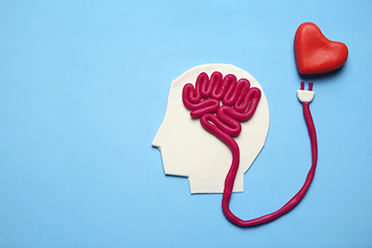 29 áreas cerebrales distintas se involucran en el enamoramiento. / Shutterstock