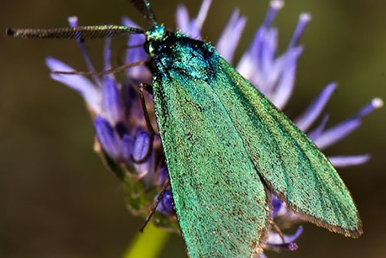 Salva a los insectos, salva el mundo