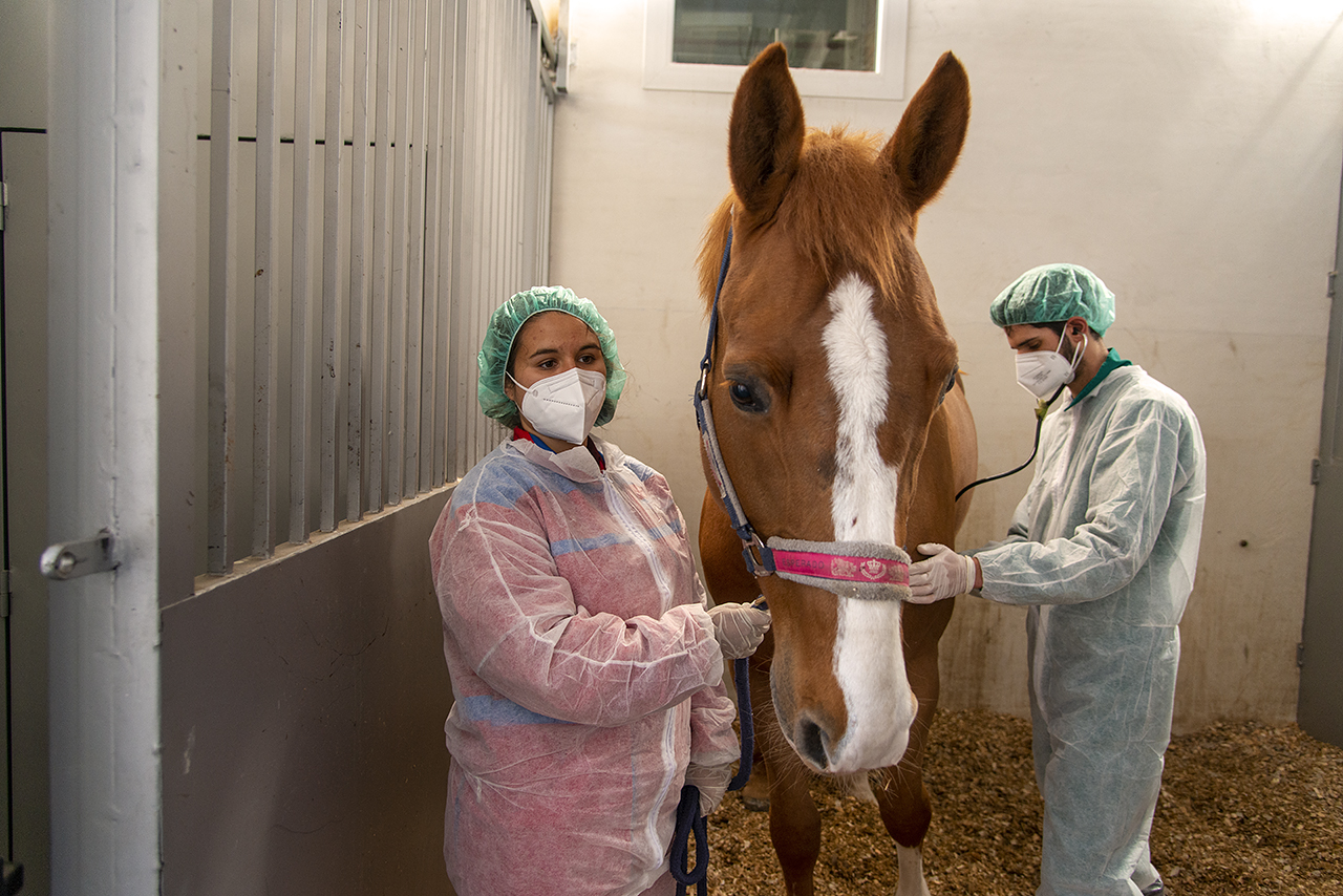 Dos estudiantes colaboradores atienden a uno de los caballos