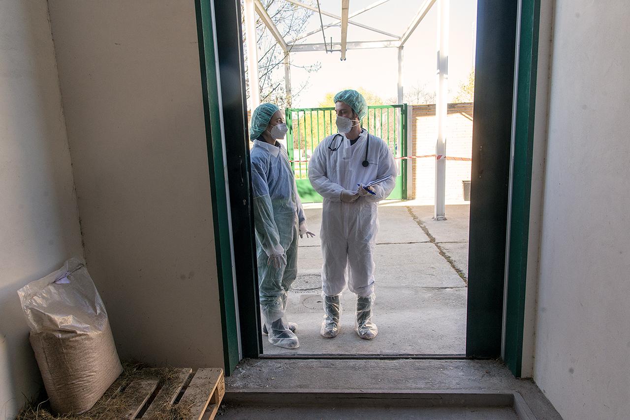 Isabel Santiago, jefa del servicio de medicina interna de caballos del HCV-UCM, junto a uno de los estudiantes colaboradores del Hospital
