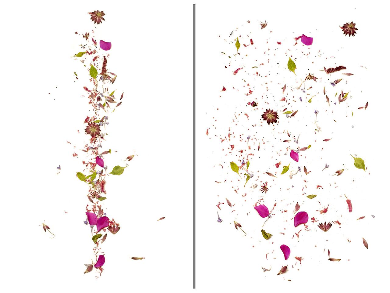 """Exposición """"Herbaria"""", de Toya Legido"""