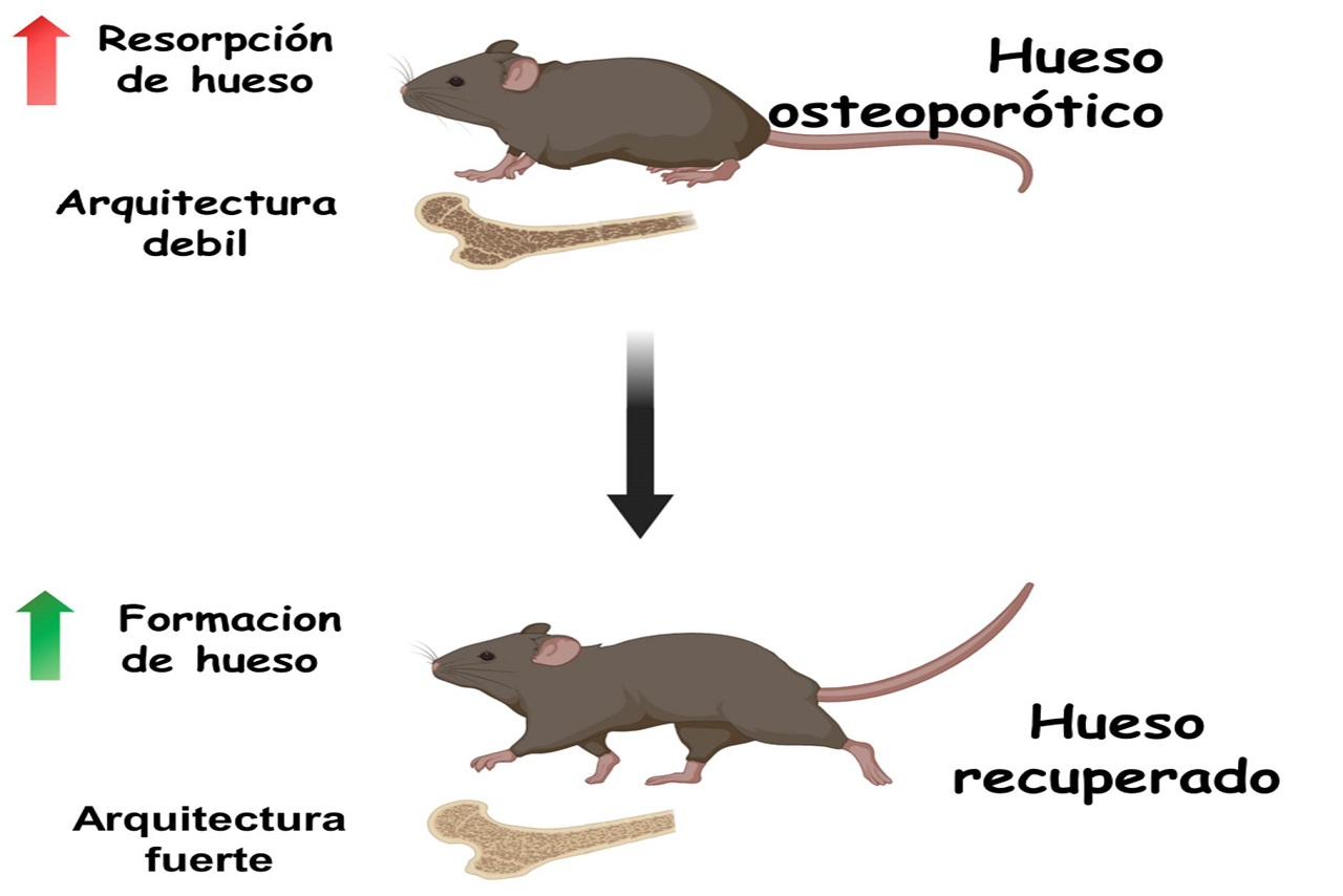 Imagen de la investigación llevada a cabo por el equipo de María Vallet